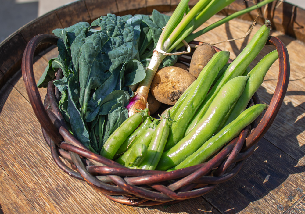 Fava beans, kale, peas, potatoes, and onions in a basket harversted from the garden.