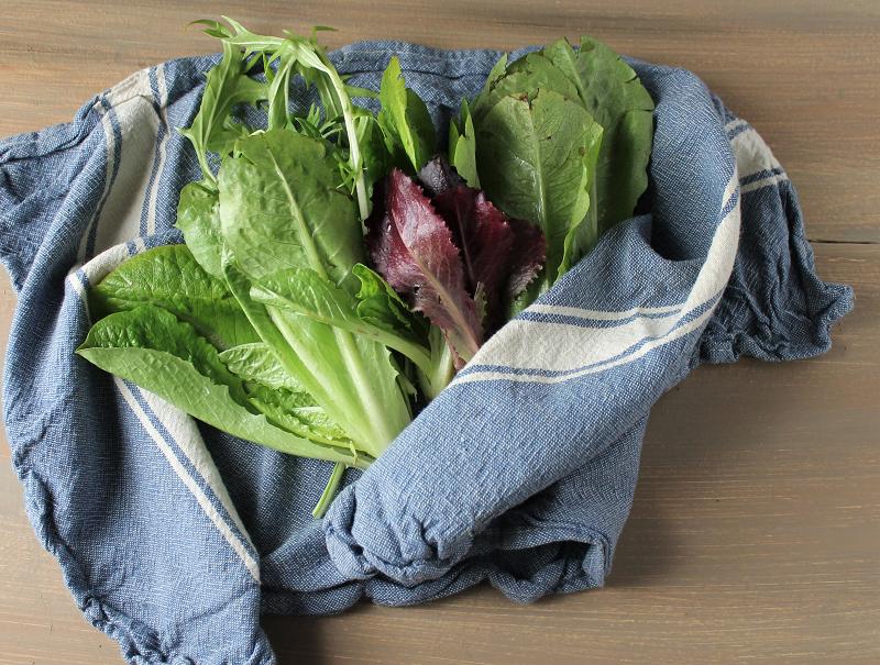 Baby lettuce heads