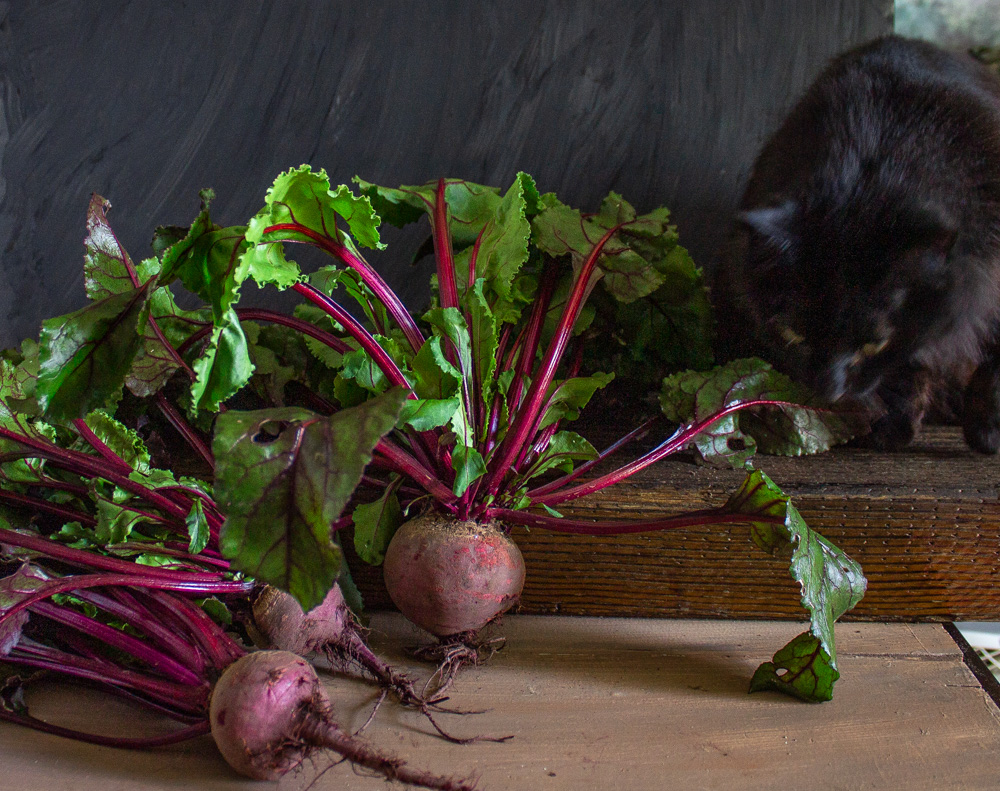 Cat and beets on dark background