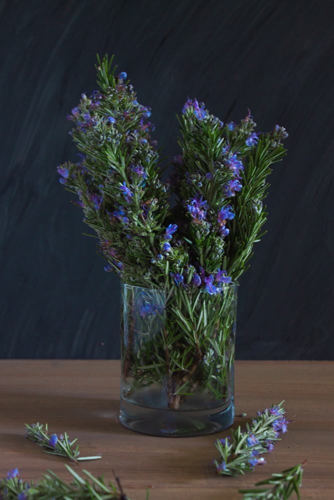 Rosemary against a dark background