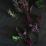 Purple kale against a dark background