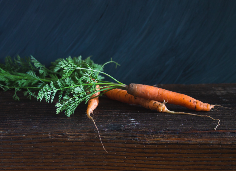 Carrots fresh from the garden on a dark background