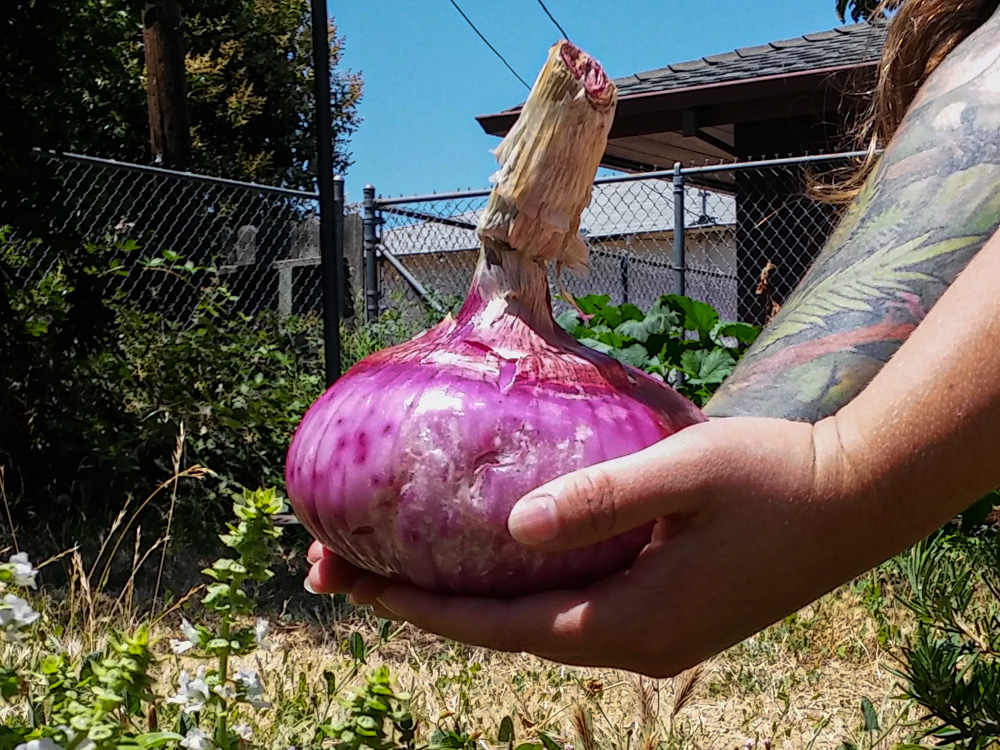1 kg onion held with both hands