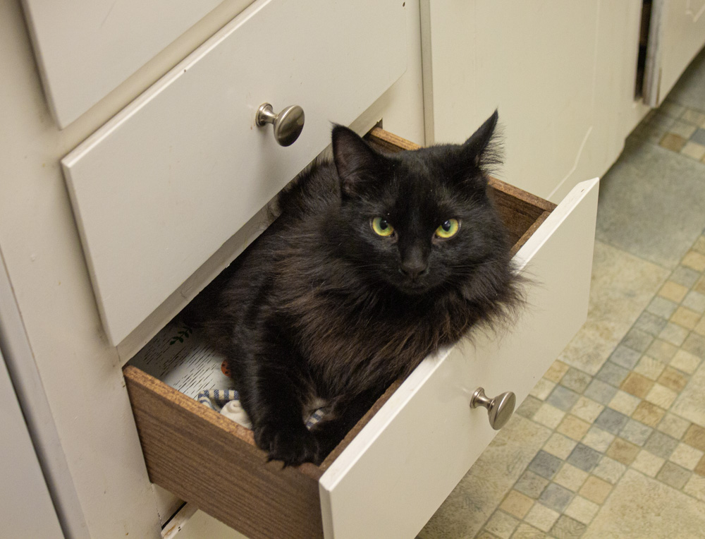 Black cat in drawer