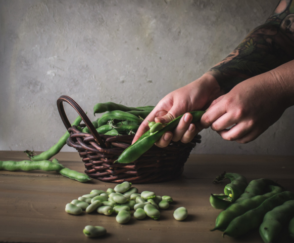 hands shellings fava beans on a wood table